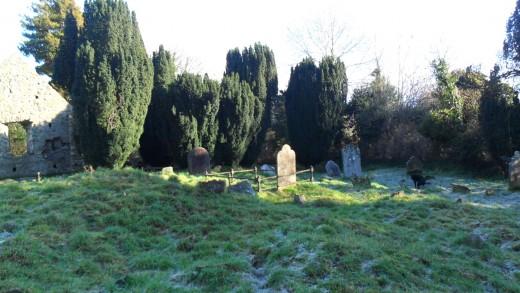 The Dog Poop Graveyard