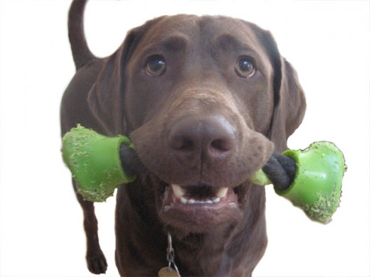 Chewing dog toys