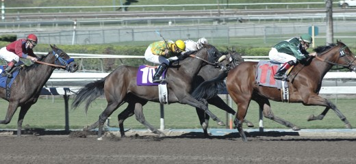 Horse racing is a great sport!