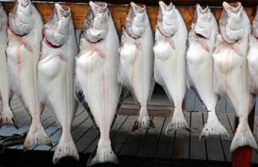 Halibut fish contains magnesium