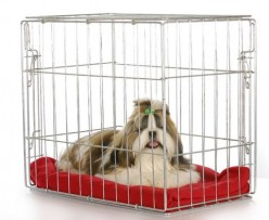 Crate Training a Puppy: the Ins and Outs