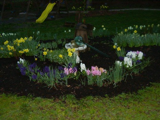 Dafodils and hyacinths brighten up even the darkest day-and very fragrant