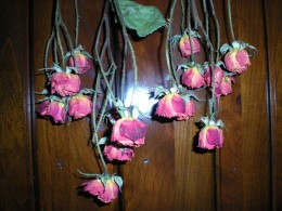 drying miniature roses