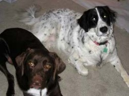 Cocoa and Pippin - All grown up