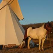apache13 profile image