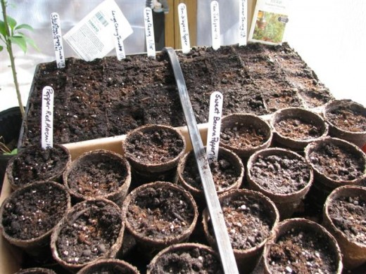 It's less expensive to start vegetable plants from seed.