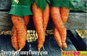 Sexy Carrot Legs