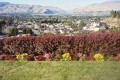 Apple Blossom Festivals, Wenatchee, Annapolis Valley, Shenondoah Valley