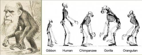 Public Domain: http://en.wikipedia.org/wiki/Evolution