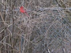 How To Encourage Birds-Birdhouses-Attracting Birds To Your Garden