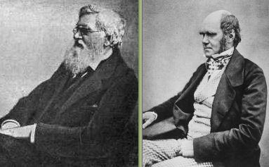 Wikimedia Commons - Public Domain http://en.wikipedia.org/wiki/File:Alfred_Russel_Wallace.jpg http://en.wikipedia.org/wiki/File:Charles_Darwin_seated_crop.jpg