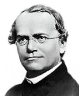 Wikimedia Commons - Public Domain http://en.wikipedia.org/wiki/File:Gregor_Mendel.png