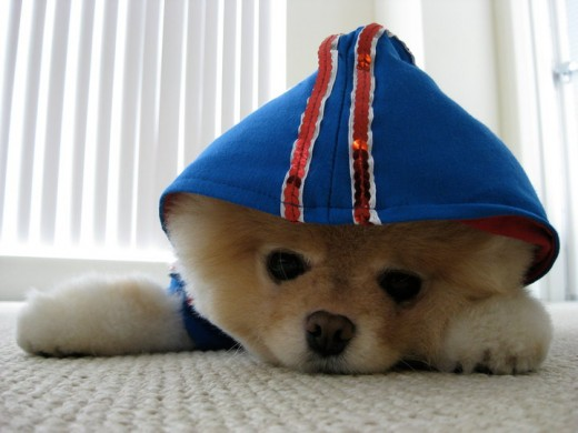 Boo dressed in a Hoodie