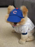 Boo dressed to cheer his team on