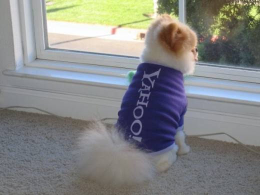 Boo does Yahoo in style