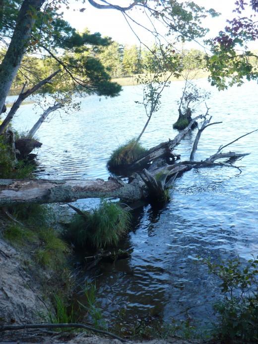 Hamlin Lake from Island Trail, Ludington State Park