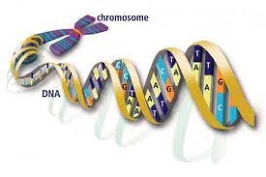 The genetic revolution is just beginning.