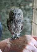 one of our tiny residents (just 3in high) now all grown up and set free