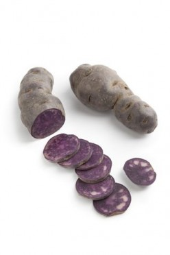How to Grow Purple Potatoes  and Recipes