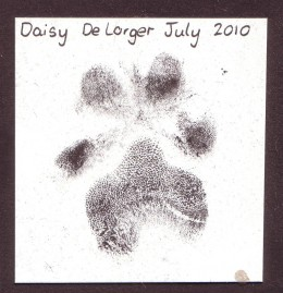 When Daisy passed, the animal hospital gave us this paw print.