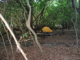 11 mile campground 100 ft back from the beach, but if you search there are beach view campsites.