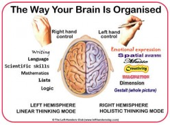 Brain Lateralisation and The Left-Handed Dilemma - a Psychological Viewpoint on handedness