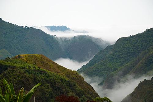 Ecuadorian Rainforest