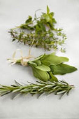 Rosemary, Sage, Thyme and Oregano
