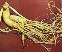 GOD'S HERB: GINSENG IS GOOD FOR HEALTH