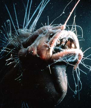 Hairy Angler Fish