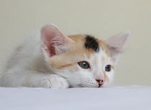 A Baby Minnie...