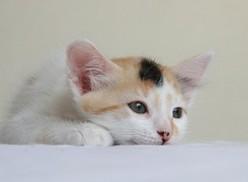 MINNIE THE CAT...by b. Malin