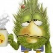 kuckoo profile image