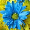 Blue Petal Media profile image