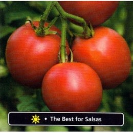 Burpee Mexicana Hybrid Tomato 30 Seeds - Best for Salsa