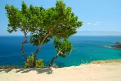 Expat Memories: Cyprus