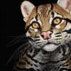 cecil.bryce profile image