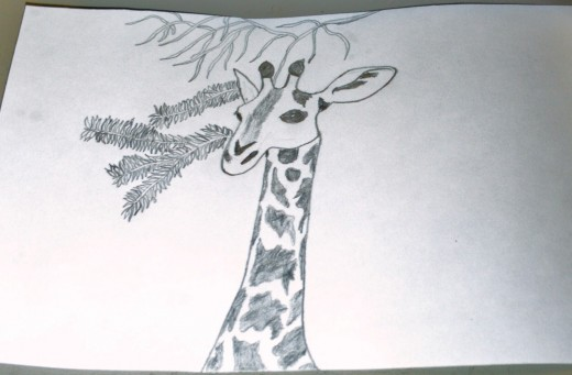 Here I have finally finished sketching the details around the giraffe.