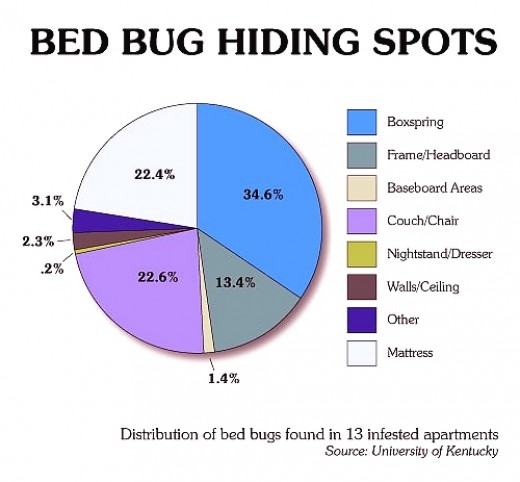 Preventing Bed Bugs At Work
