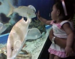 Ella's Fish Friend