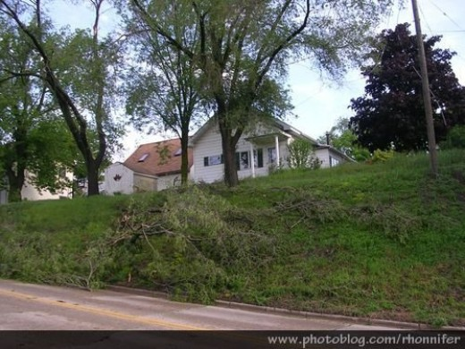 The branch laying on the hill is the one that took out my power lines.  (Manistee, Michigan)
