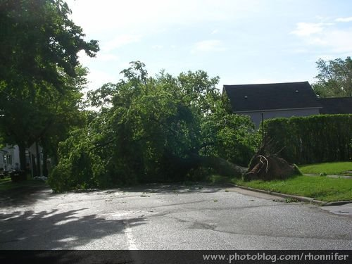 Just down the block from my house, a tree was entirely blocking the street.  (Manistee, Michigan)