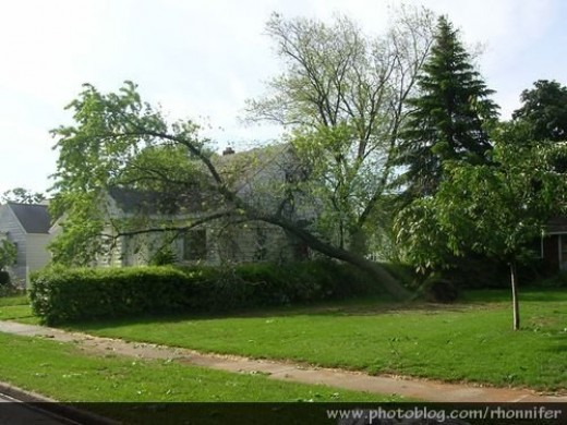There was tree damage at almost every house in my neighborhood.  (Manistee, Michigan)