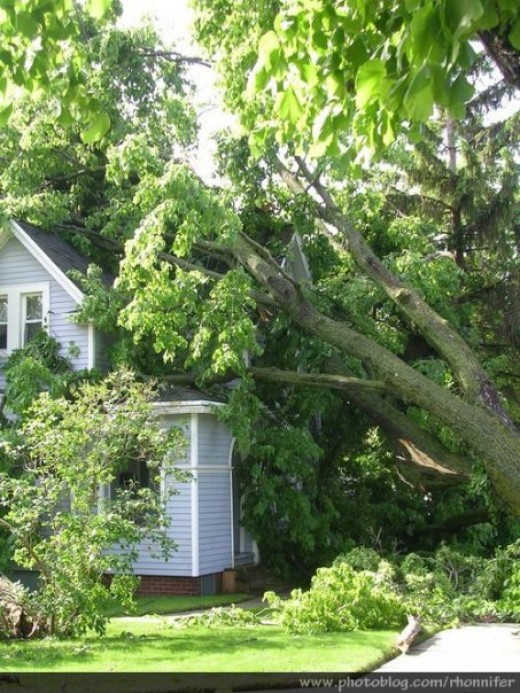 This poor house was entirely buried under enormous fallen trees.  (Manistee, Michigan)