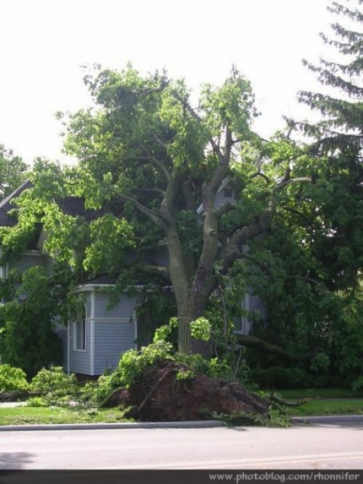Another view of the same house buried beneath a fallen tree.  (Manistee, Michigan)