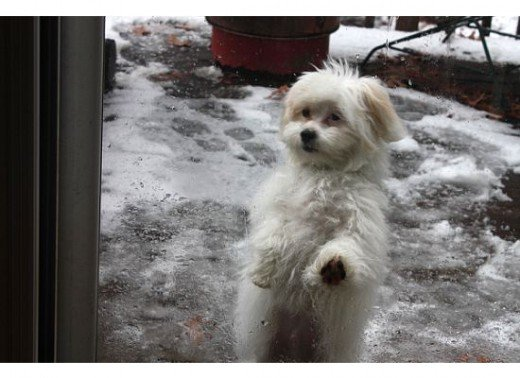 Fluffy new puppy in the snow