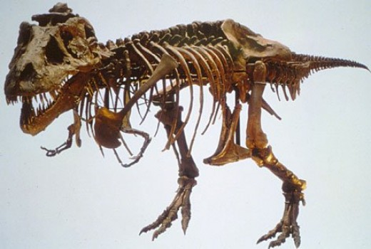 Although you find this guy at the Dorset Dinosaur Museum, you'll find similar fossils!