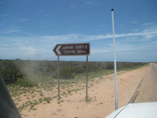 Where to watch turtles hatching at Ningaloo Reef