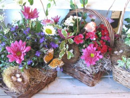 pony pacs of flowers arranged in baskets for an inexpensive garden centerpiece.