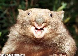 Brown Wombat smiles